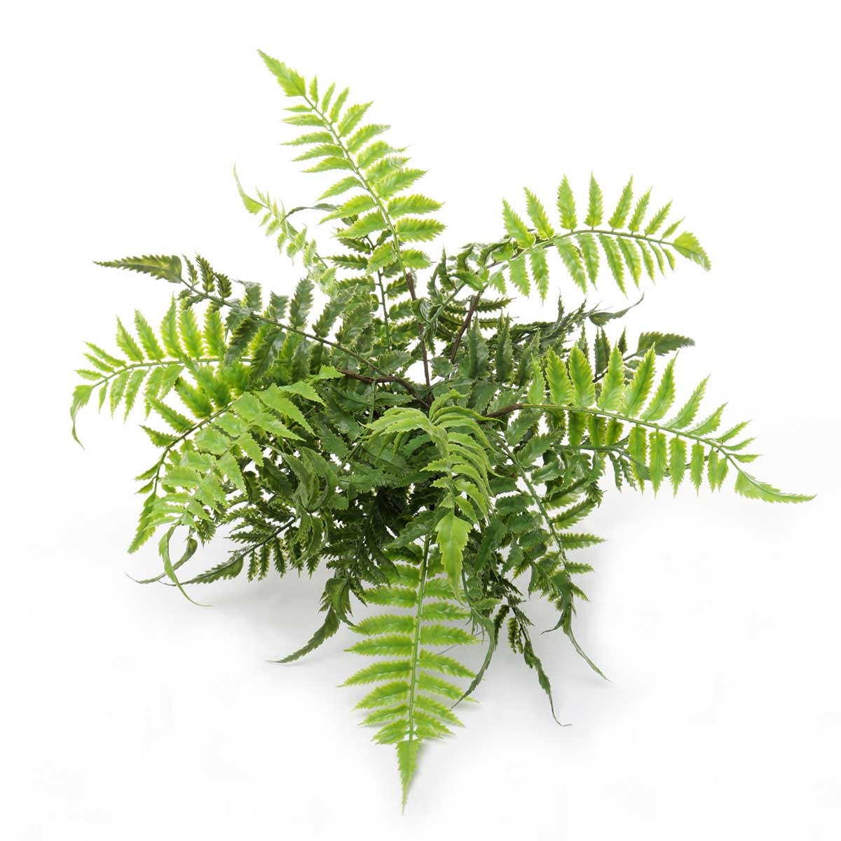 "LEATHER LEAF FERN 20""X17.5"""