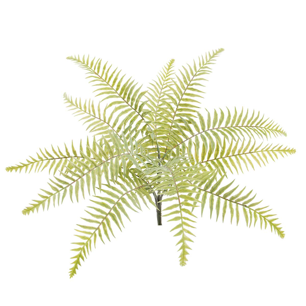 "LIGHT GREEN GARDEN FERN BUSH 22""X20.5"""