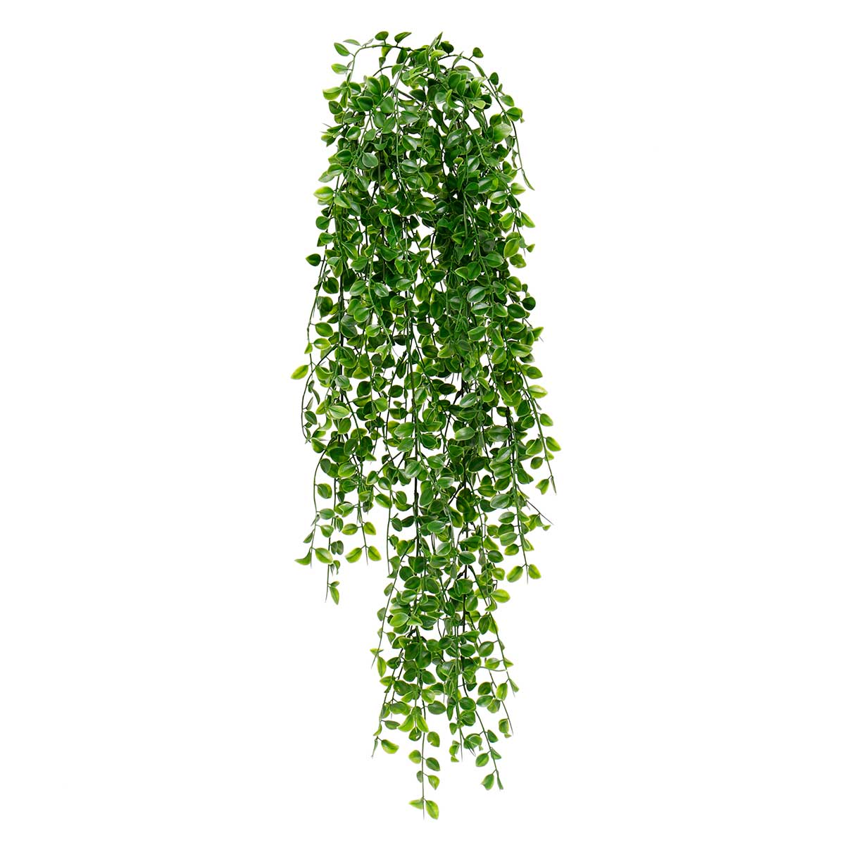 "GREEN HANGING PRIVET BUSH 11""X31"""