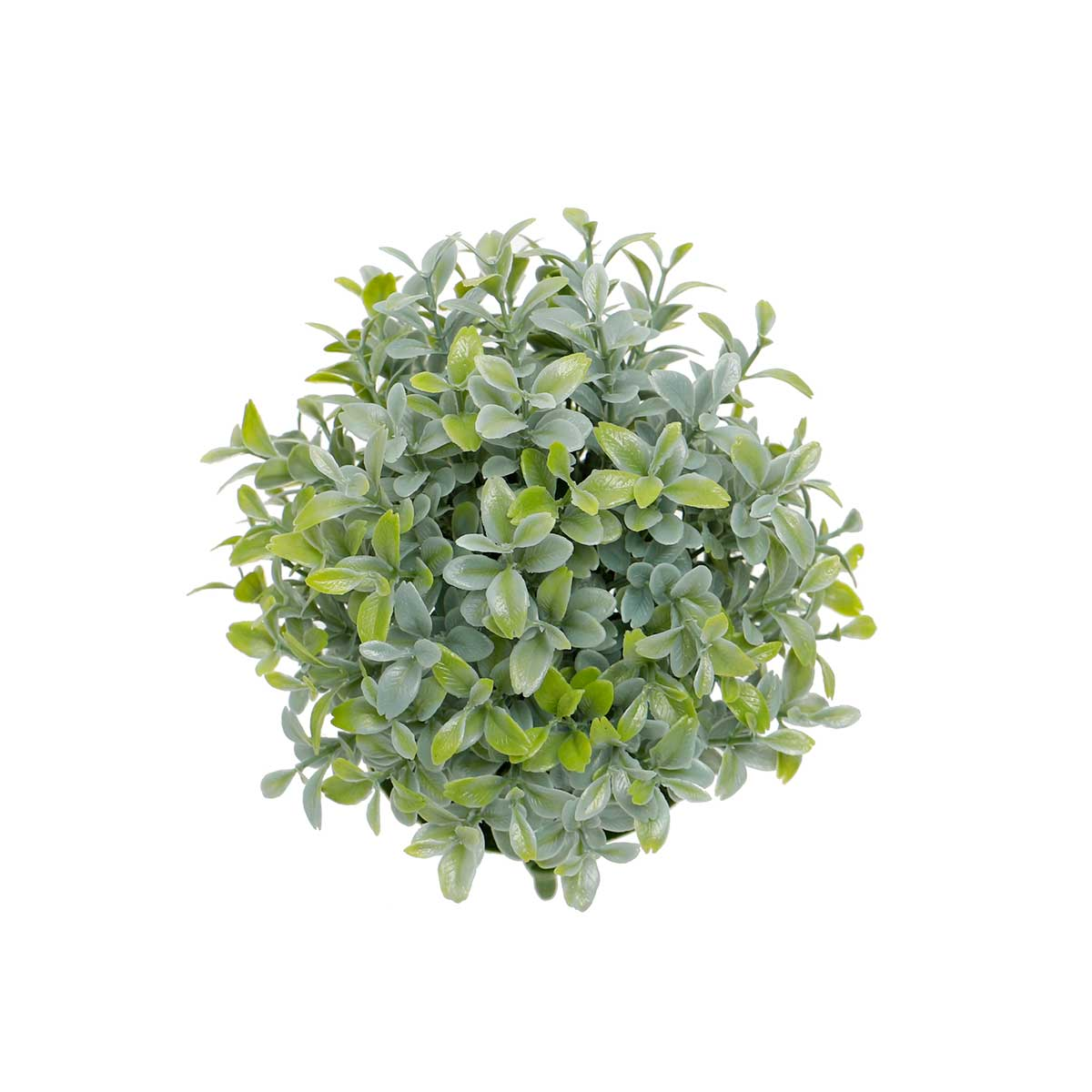 "PRIVET BALL DOME 7""X8"" GREEN"