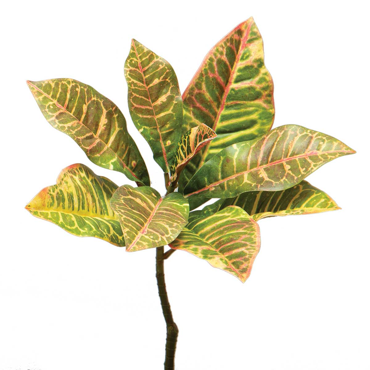 "CROTON BUSH 13""X18"" GREEN"