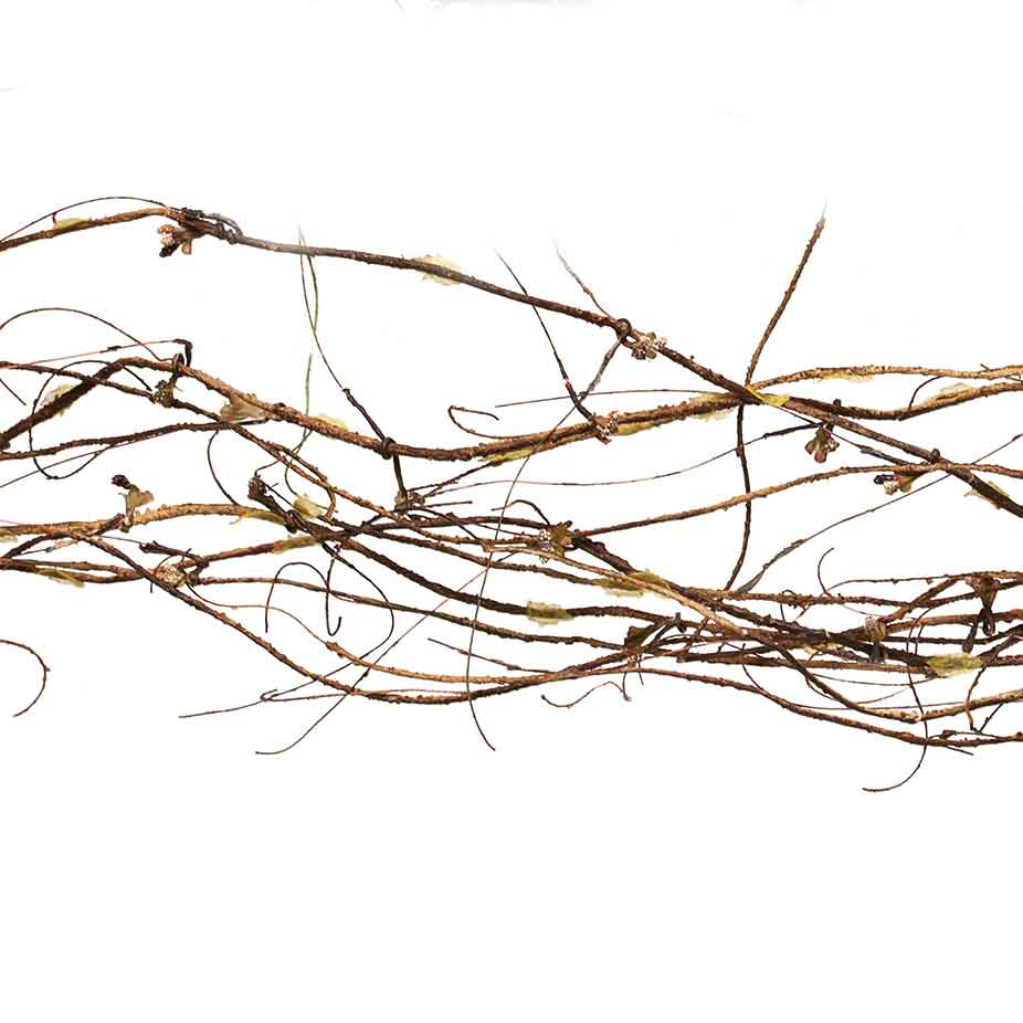 M5064 TWIG GARLAND 6' BROWN EACH