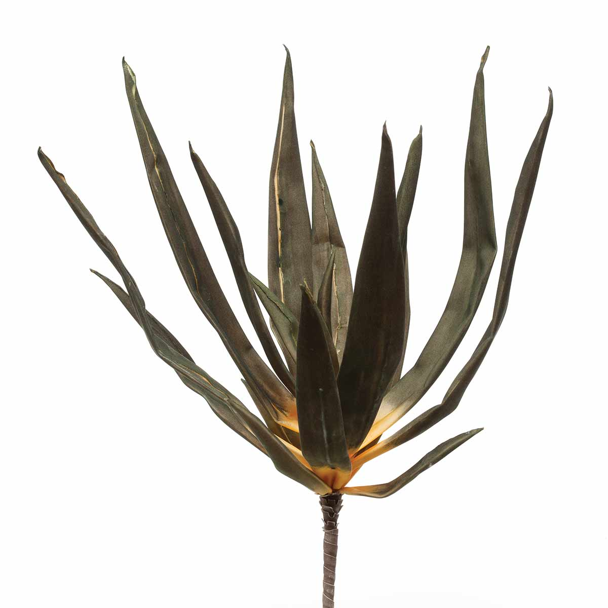 "M8680 GREEN AGAVE BUSH 22""-EACH 70sp"
