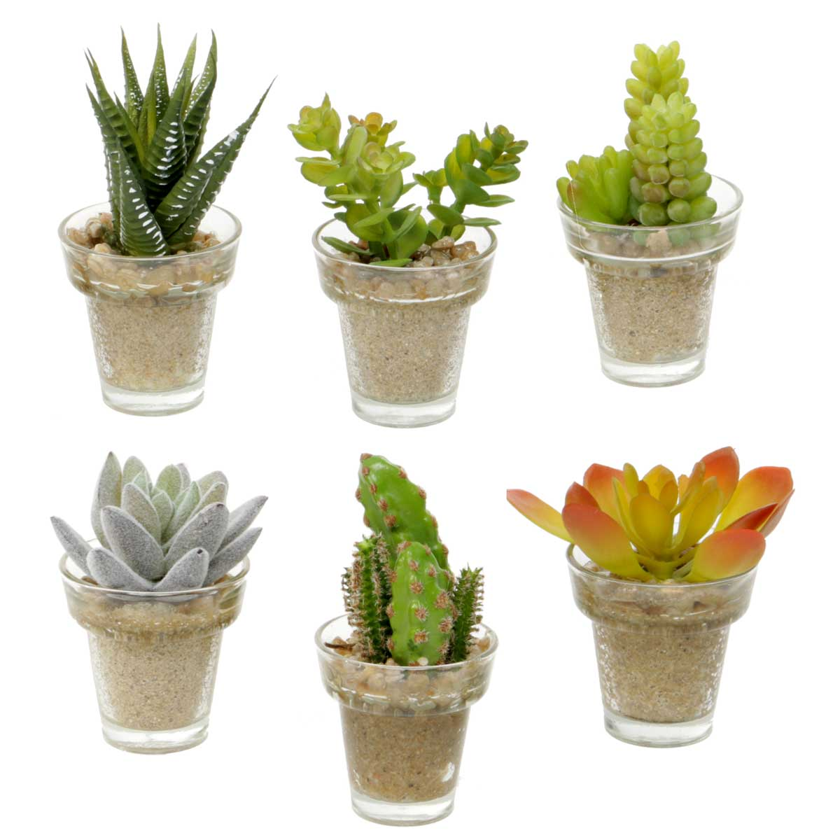 MINI SUCCULENT IN GLASS POT SET OF 6
