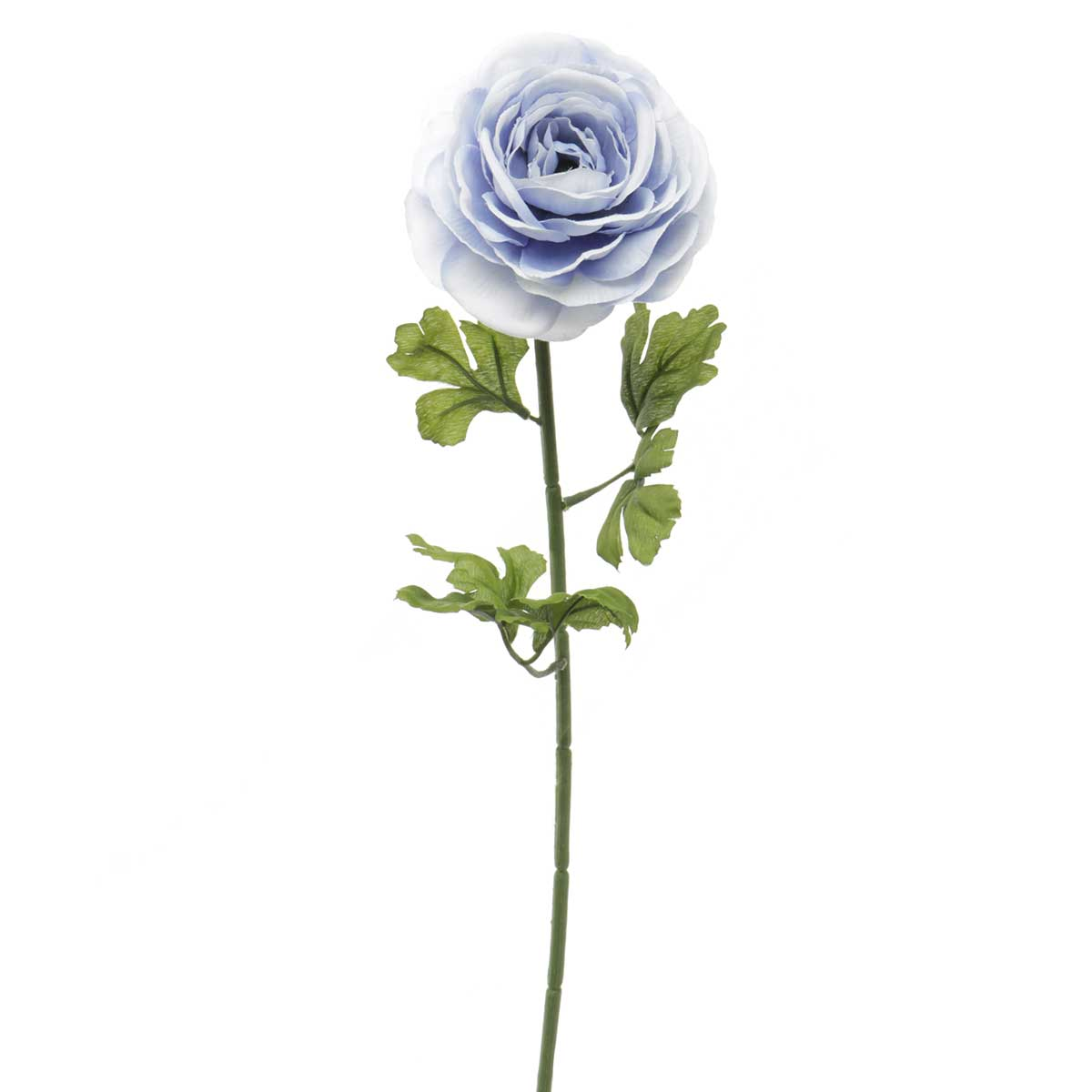 "French Blue Ranunculus X1 3""x23"" Periwinkle"