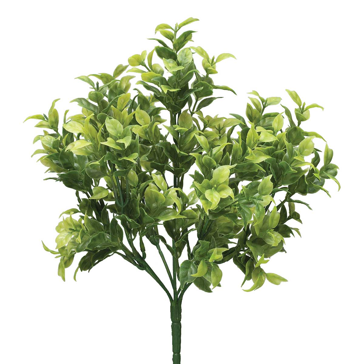 "GREEN CAPSICUM BUSH X7 7""X12"""