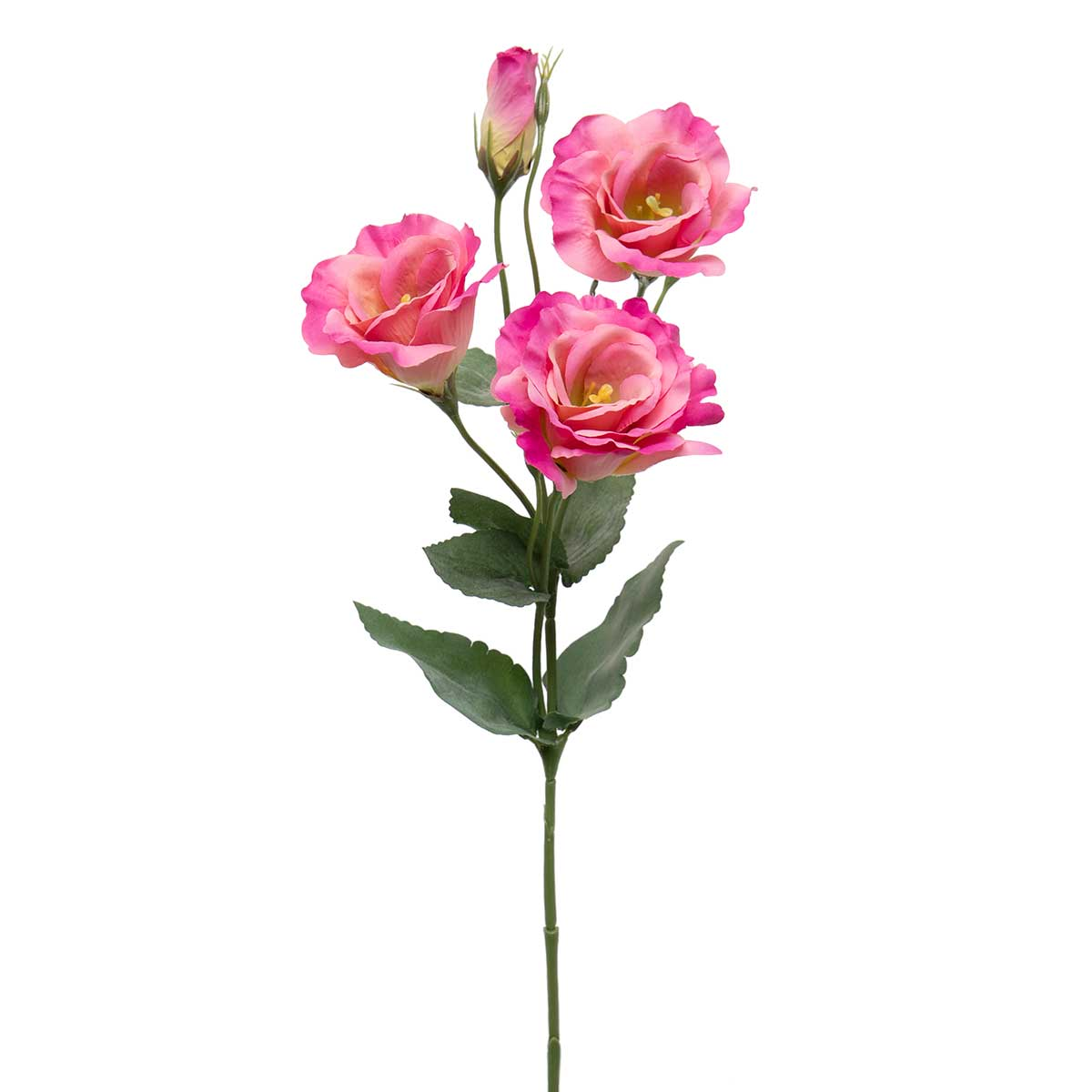 "ROMANCE SORBET LISIANTHUS WITH BUD 8""X21"" RASPBERRY PINK"