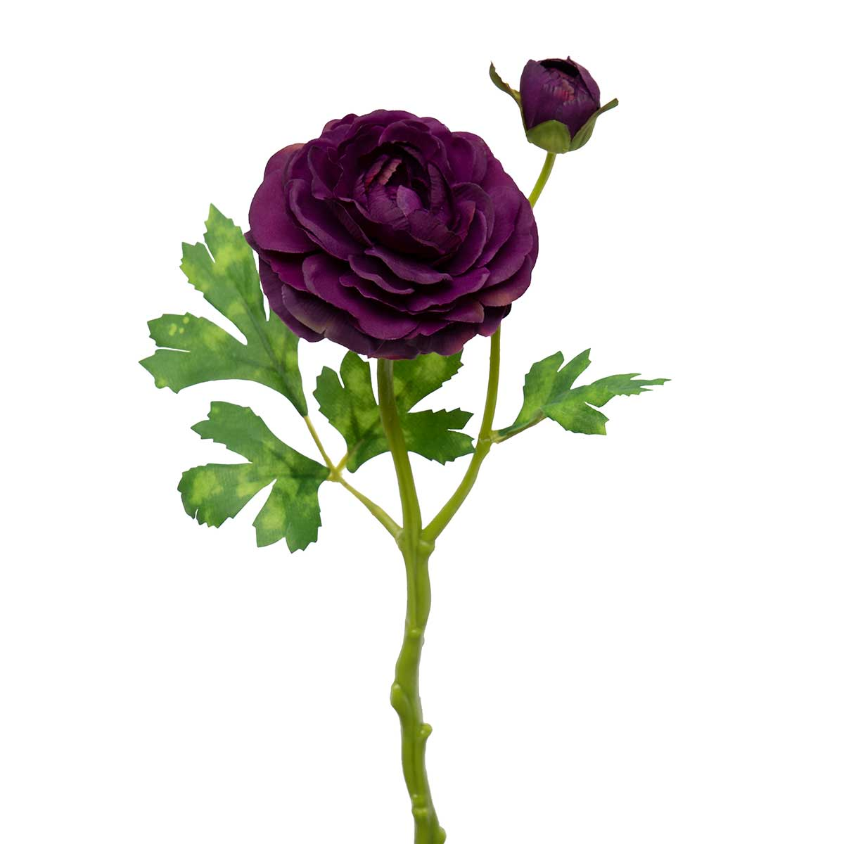 "RANUNCULUS WITH BUD 4.5""X13.75"" PURPLE"