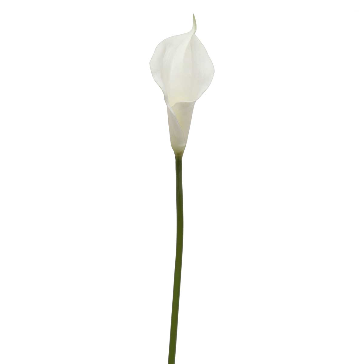 "REAL TOUCH CALLA LILY 3.75""X5.5""X25.5"" WHITE"