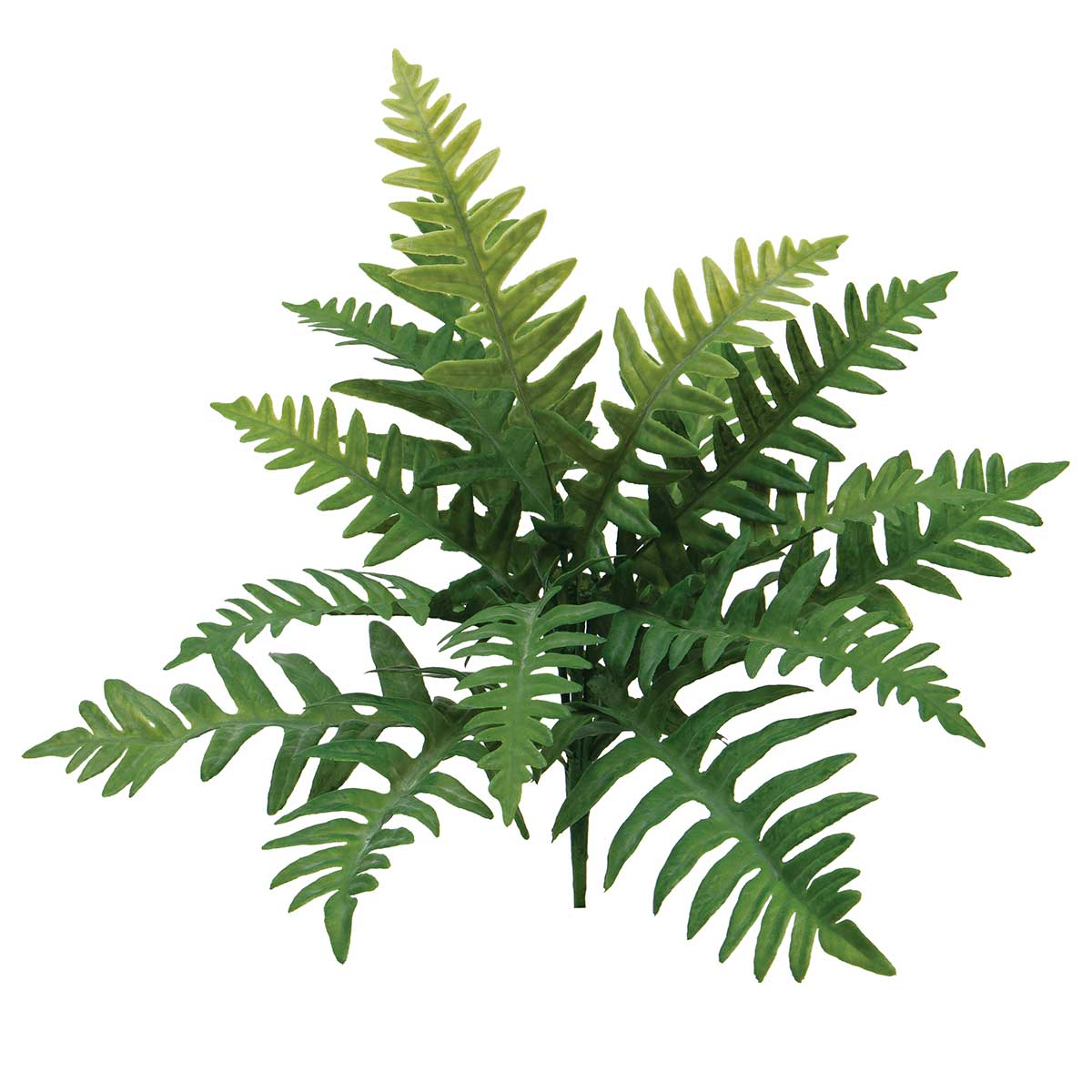 "BROAD FERN BUSH 15""X16"" GREEN"
