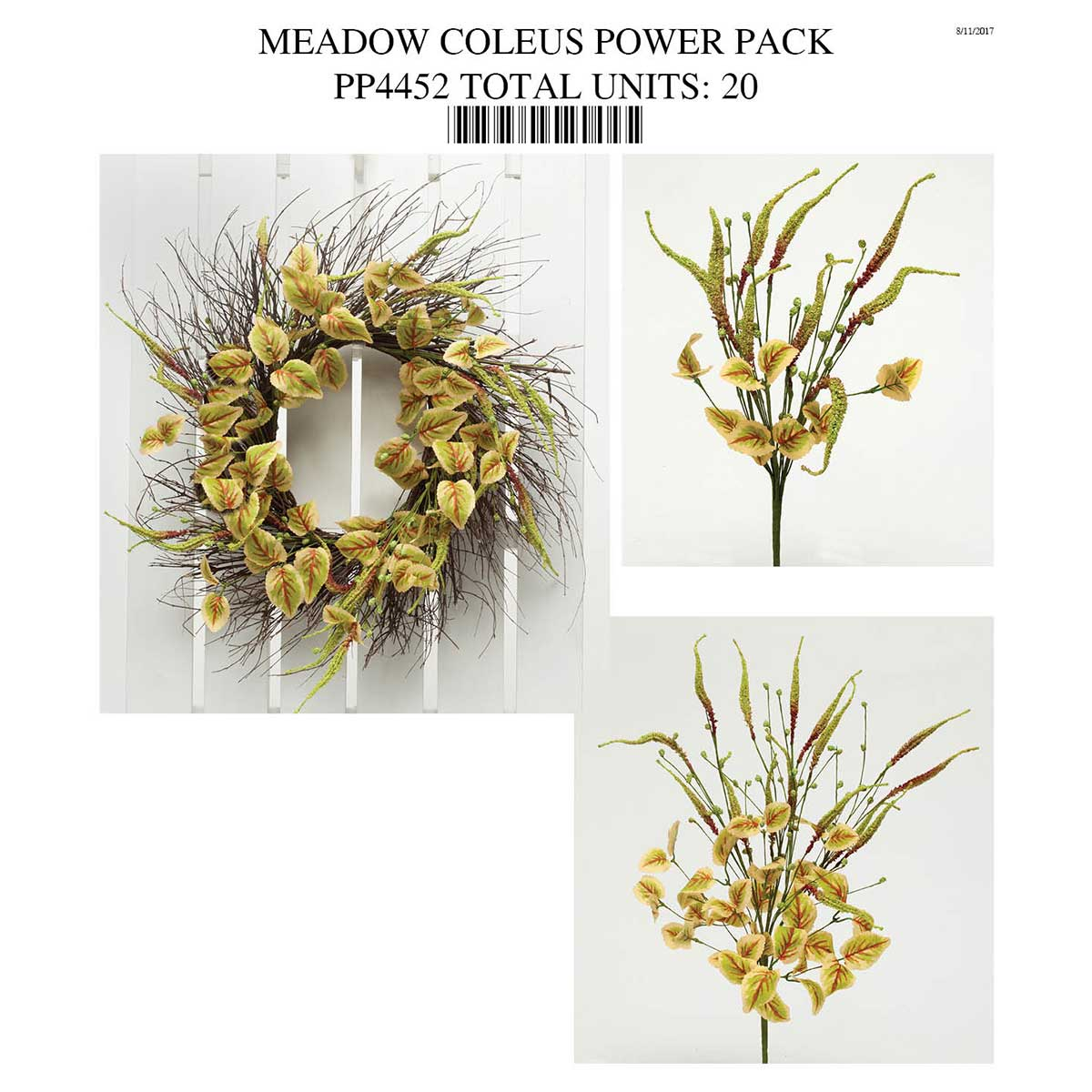 MEADOW COLEUS POWER PACK PP4452