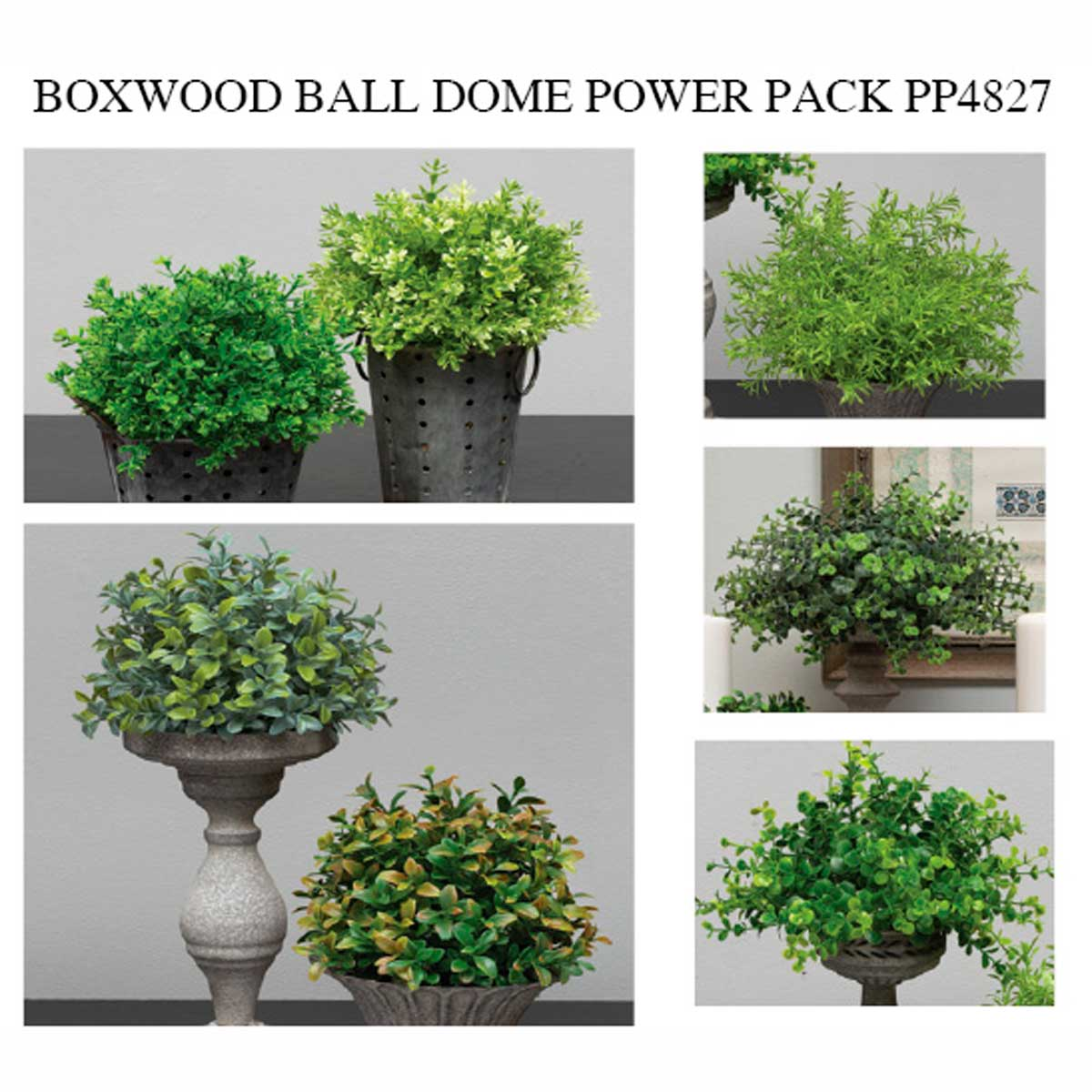 BOXWOOD BALL DOME POWER PACK 30 UNITS