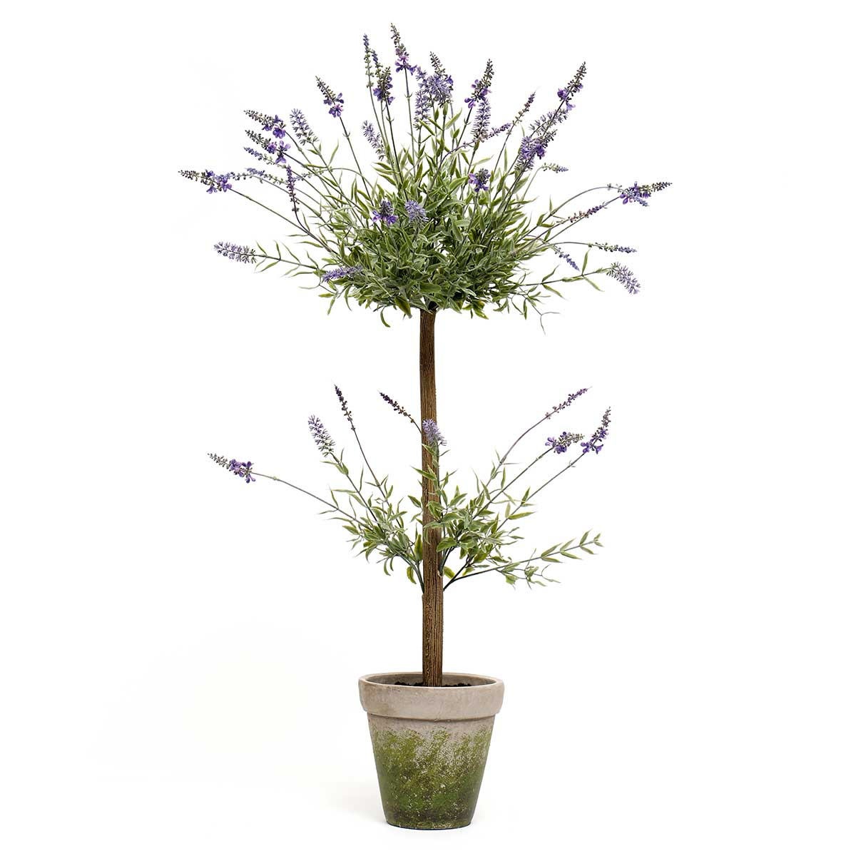 "LAVENDER TREE IN CONCRETE POT MEDIUM 26""X43"""