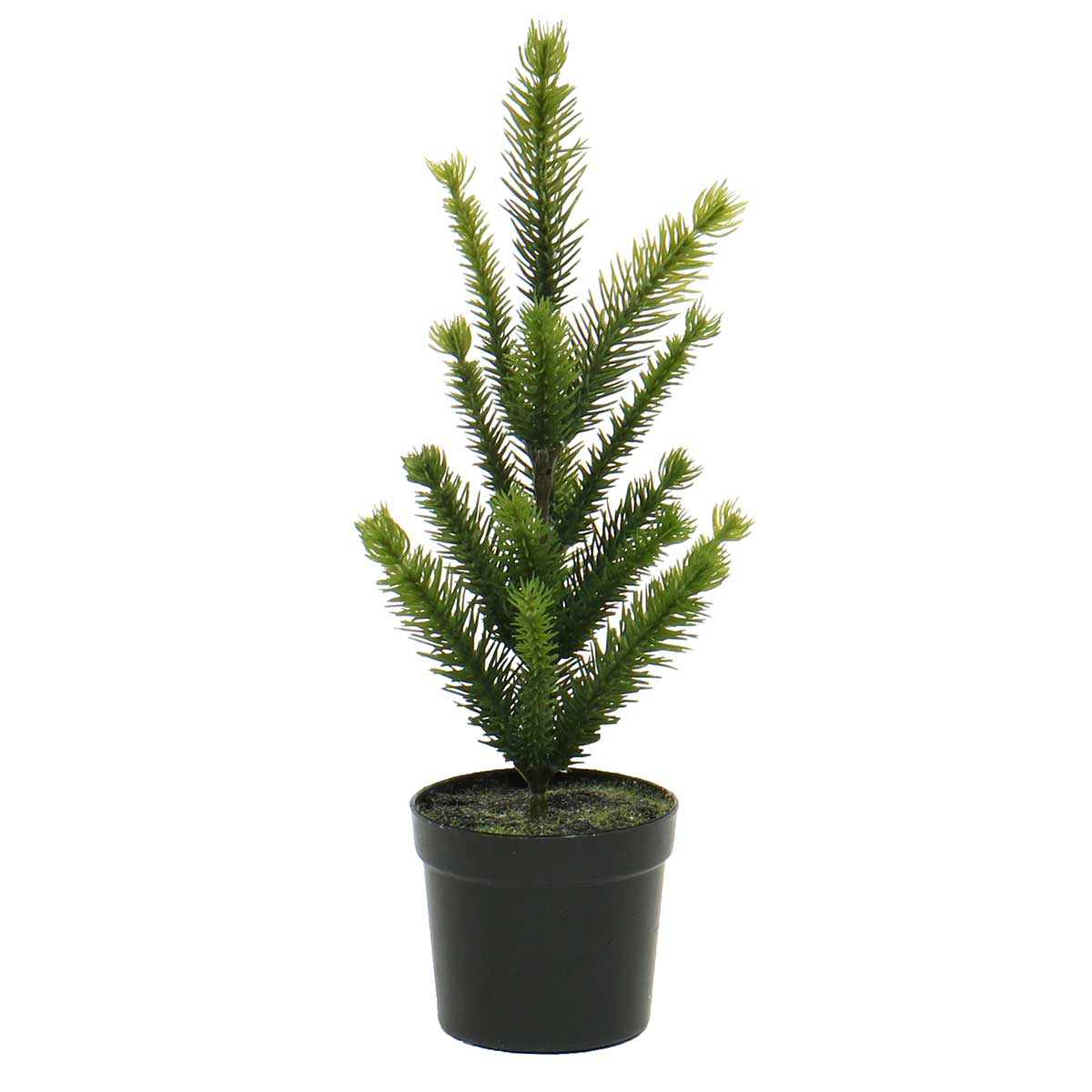 FIR TREE IN BLACK POT
