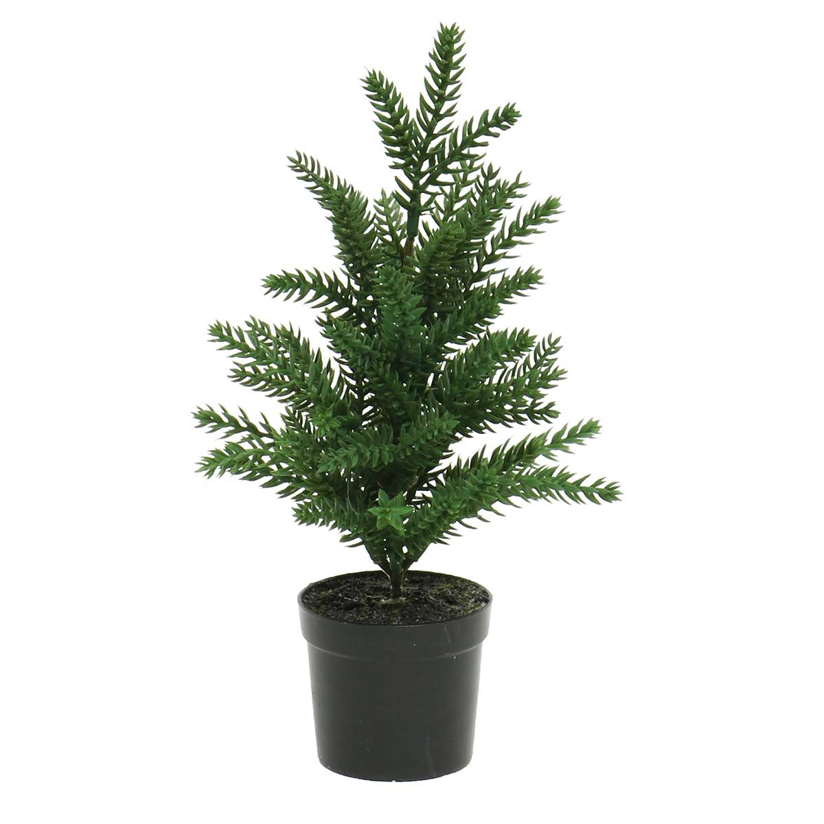 SPRUCE TREE IN BLACK POT