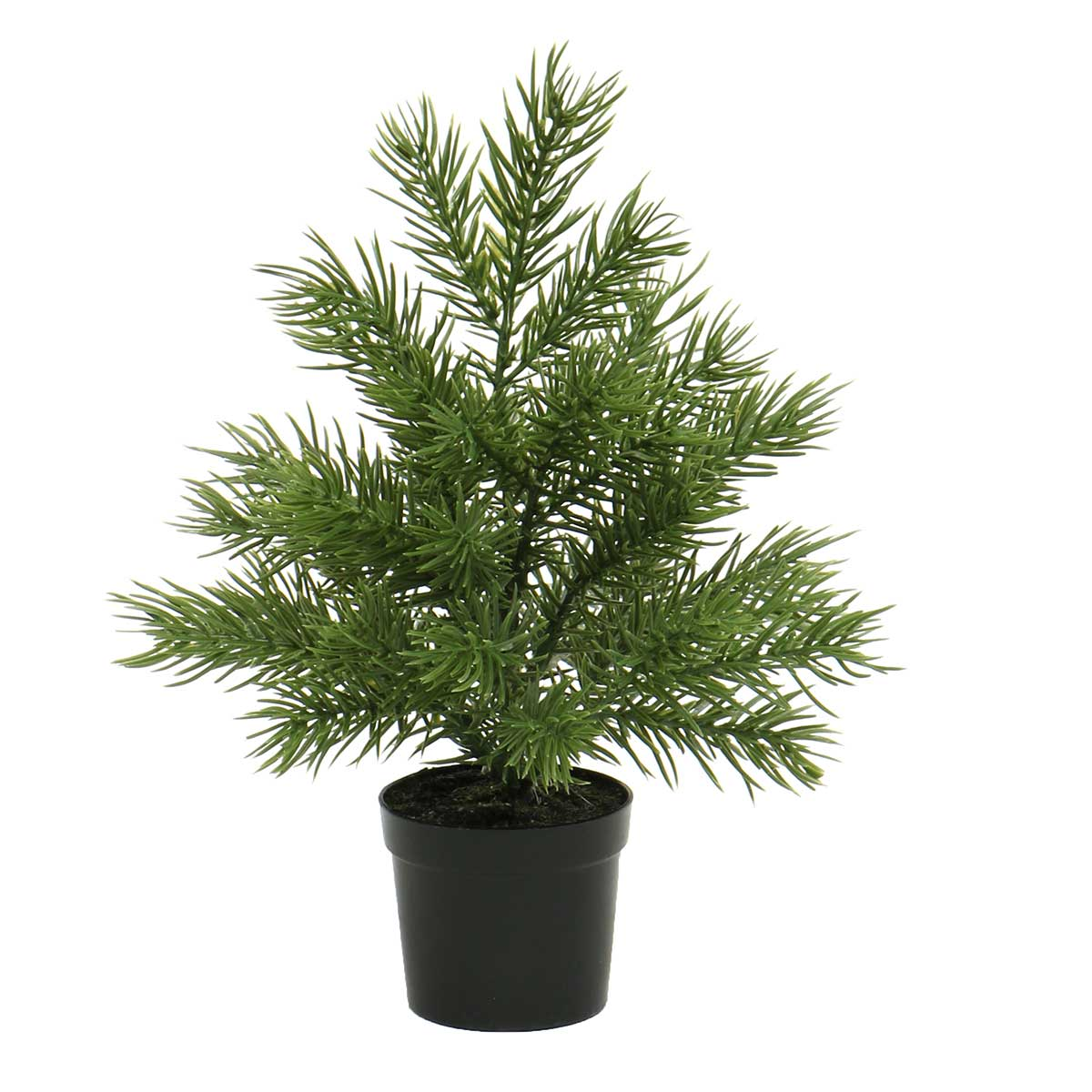 MINI BALSAM FIR TREE IN BLACK POT