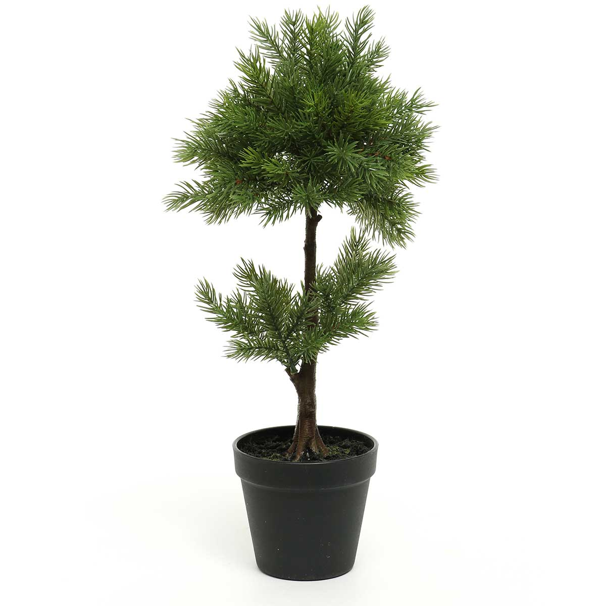 BALSAM FIR TOPIARY TREE IN -ff40
