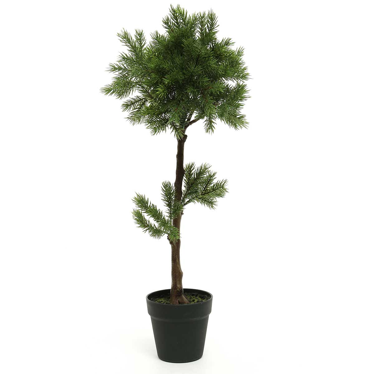 BALSAM FIR TOPIARY TREE IN-ff40