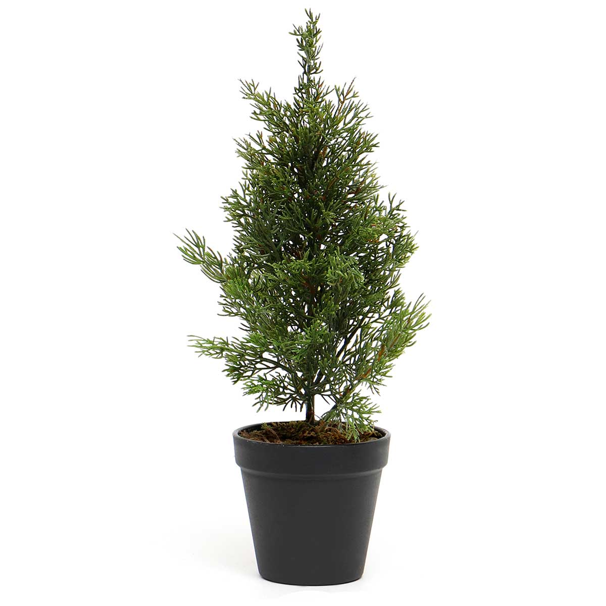 CEDAR TREE IN BLACK POT-ff40